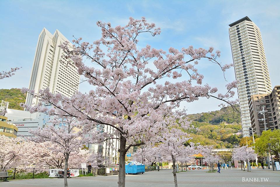 新神戶到三宮1.6公里粉紅櫻花道 賞花不用人擠人 下車站就到