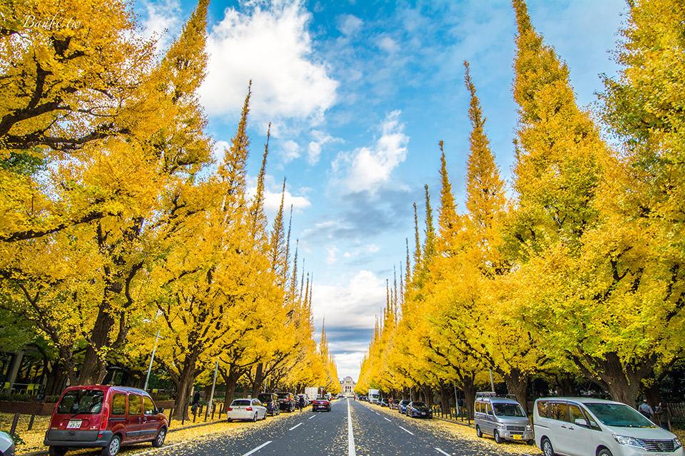 東京明治神宮外苑銀杏並木 超美的金黃色世界,壯觀銀杏走廊地毯