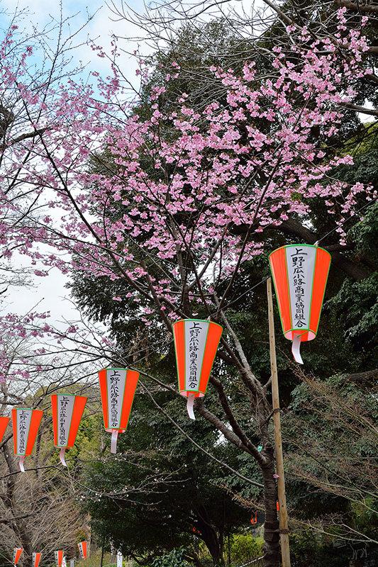 日本東京賞櫻景點名所:上野公園櫻花行程交通,日本櫻花開花滿開時間